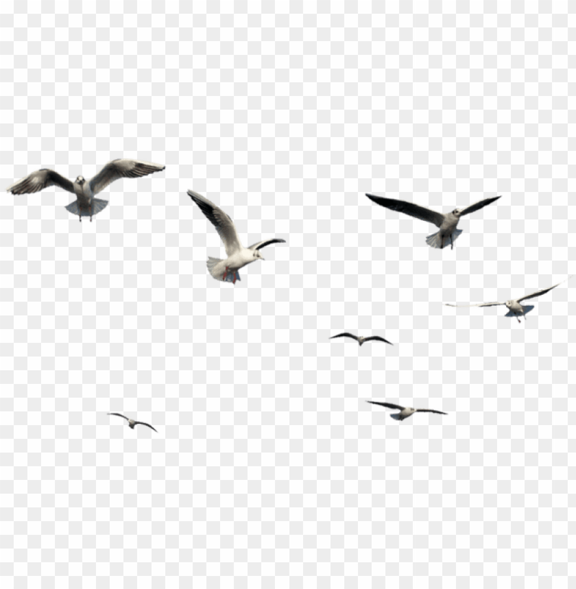 free PNG free png download flying bird bird png images background - flying bird bird PNG image with transparent background PNG images transparent