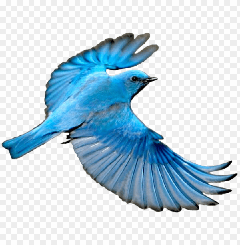free PNG free png download flying mountain blue bird png images - blue bird wings spread PNG image with transparent background PNG images transparent
