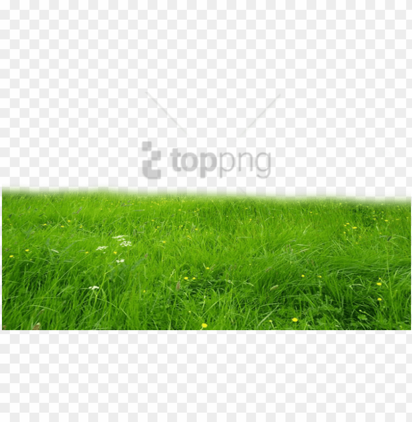 free PNG free png download grass hd png images background png - deviantart grass PNG image with transparent background PNG images transparent
