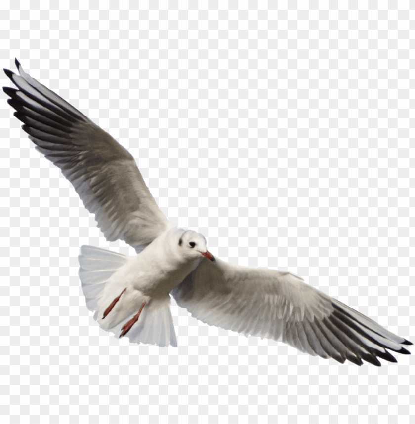 free PNG free png download gull png images background png images - seagull PNG image with transparent background PNG images transparent