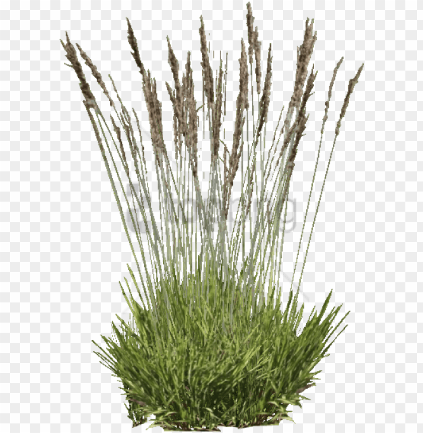 free PNG free png download purple moor grass png images background - grass PNG image with transparent background PNG images transparent