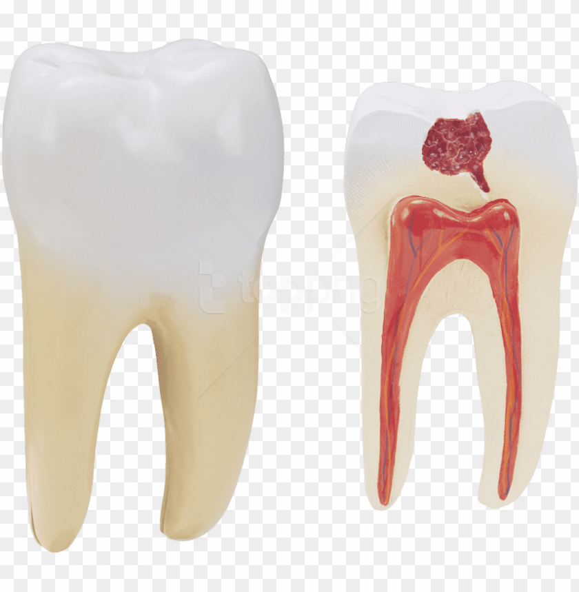 free PNG free png download teeth png images background png images - human tooth PNG image with transparent background PNG images transparent