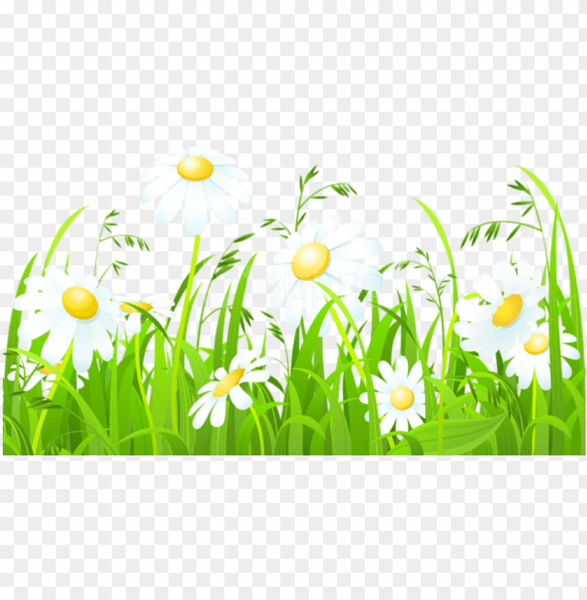 free PNG free png download white flowers and grass transparent - clipart of grass and flowers PNG image with transparent background PNG images transparent