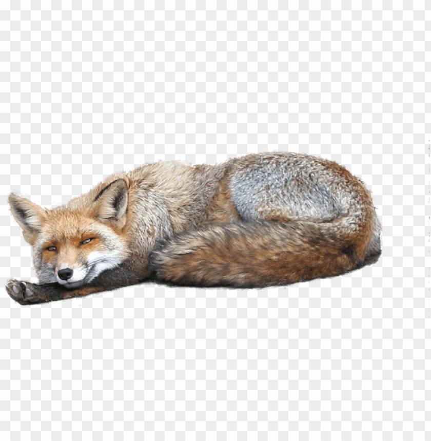 free PNG free png fox png images transparent - عکس های فانتزی زیبا PNG image with transparent background PNG images transparent