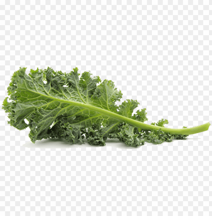 free PNG free png kale png pic png images transparent - transparent background kale PNG image with transparent background PNG images transparent