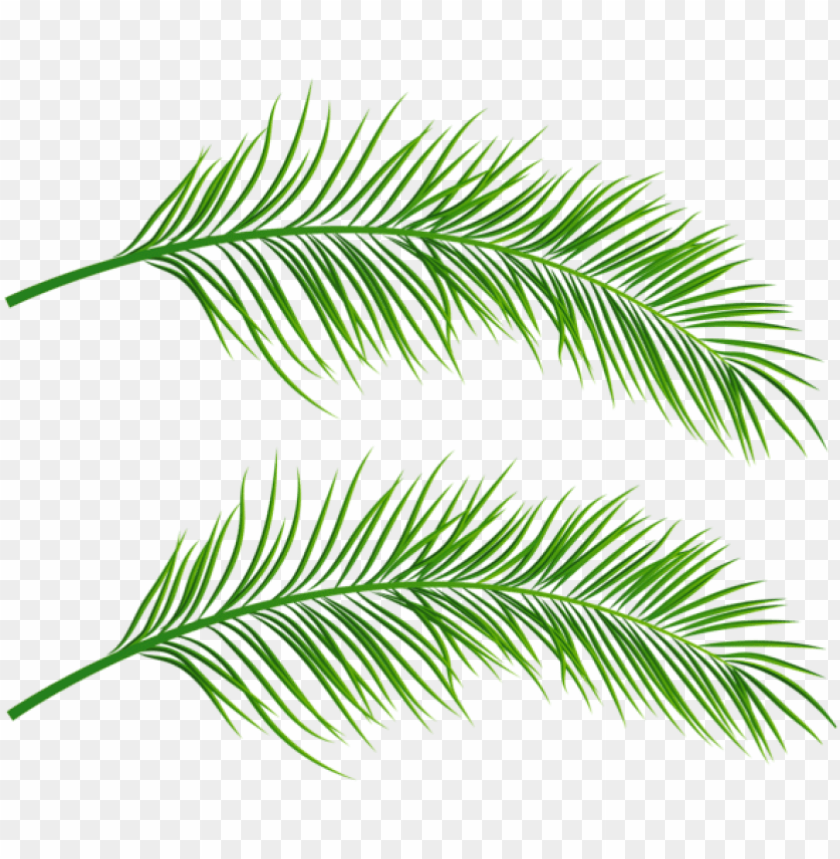 free PNG free png palm leaves transparent png images transparent - transparent palm leaves PNG image with transparent background PNG images transparent
