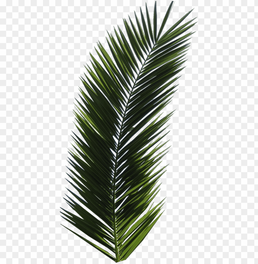 free PNG free png palm tree png images transparent - palm tree leaf PNG image with transparent background PNG images transparent