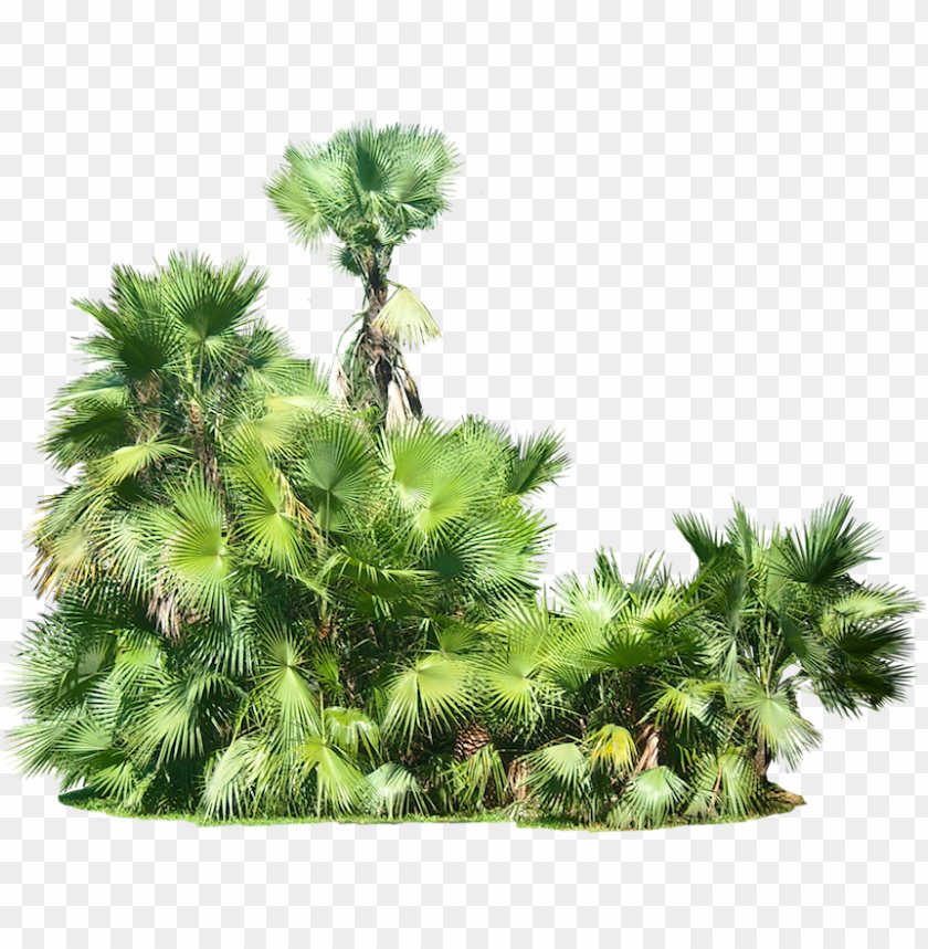 free PNG free png plants png images transparent - tropical plants transparent background PNG image with transparent background PNG images transparent