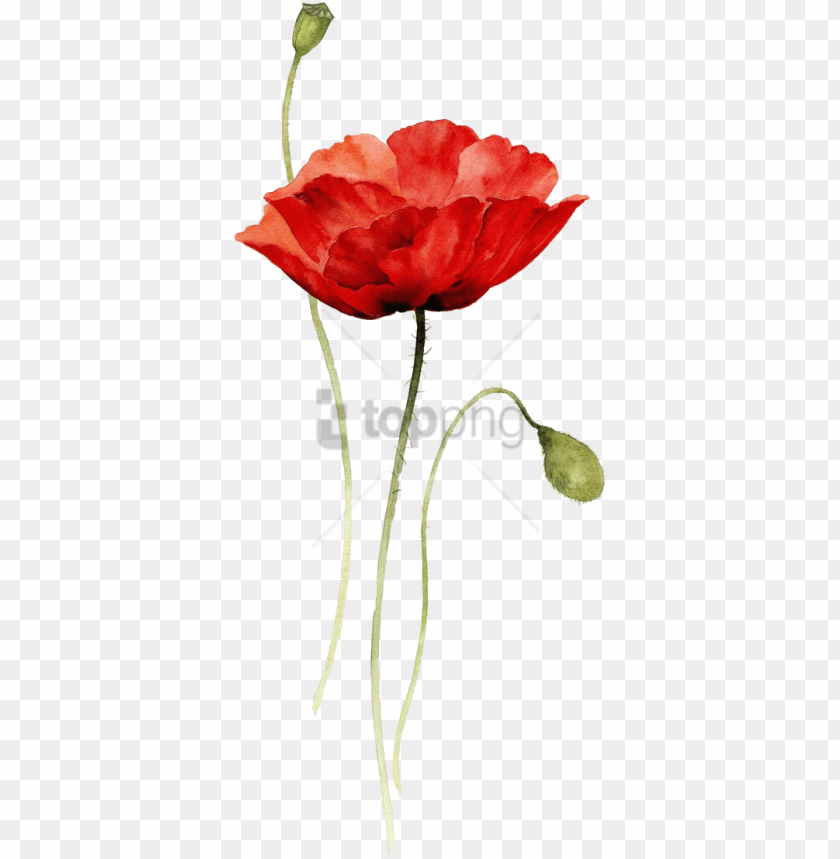 Free Png Red Poppy Watercolor Tattoo Png Image With Poppy Flower