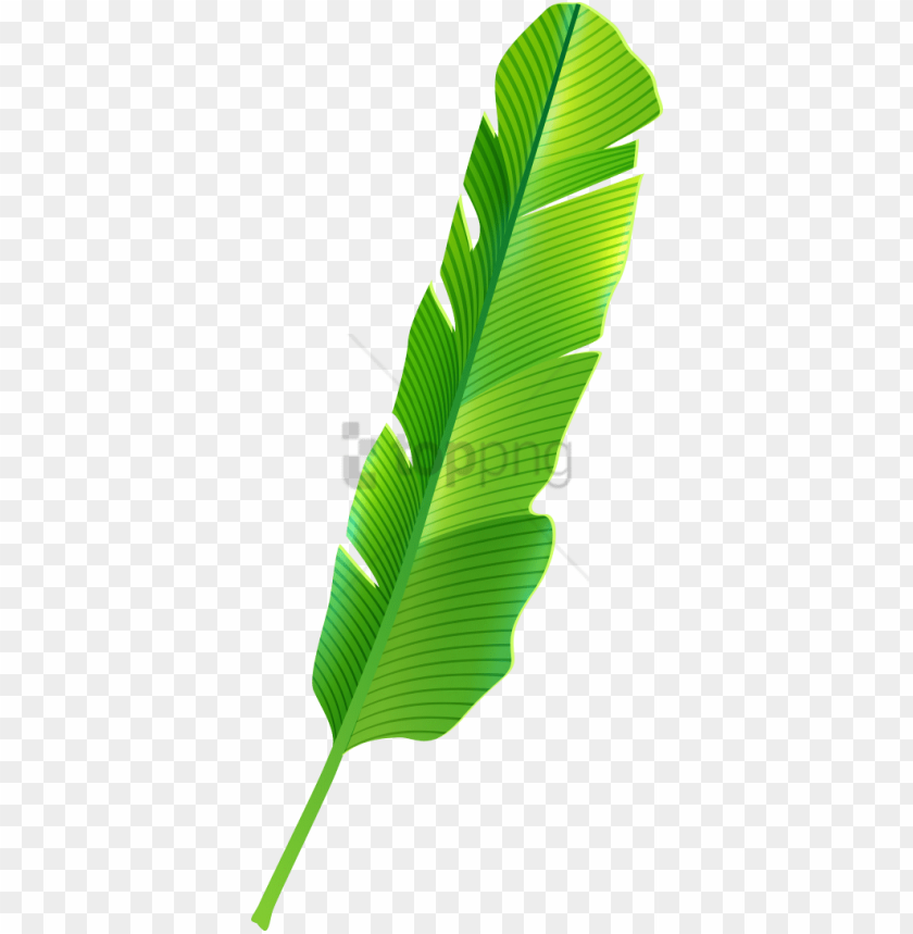 free PNG free png tropical banana leaf png image with transparent - banana leaves clipart PNG image with transparent background PNG images transparent