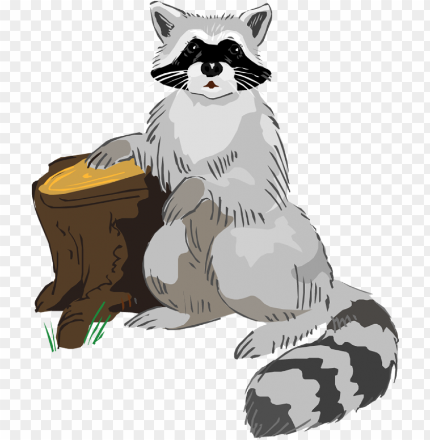 free PNG free raccoon clipart - raccoon clip art free PNG image with transparent background PNG images transparent