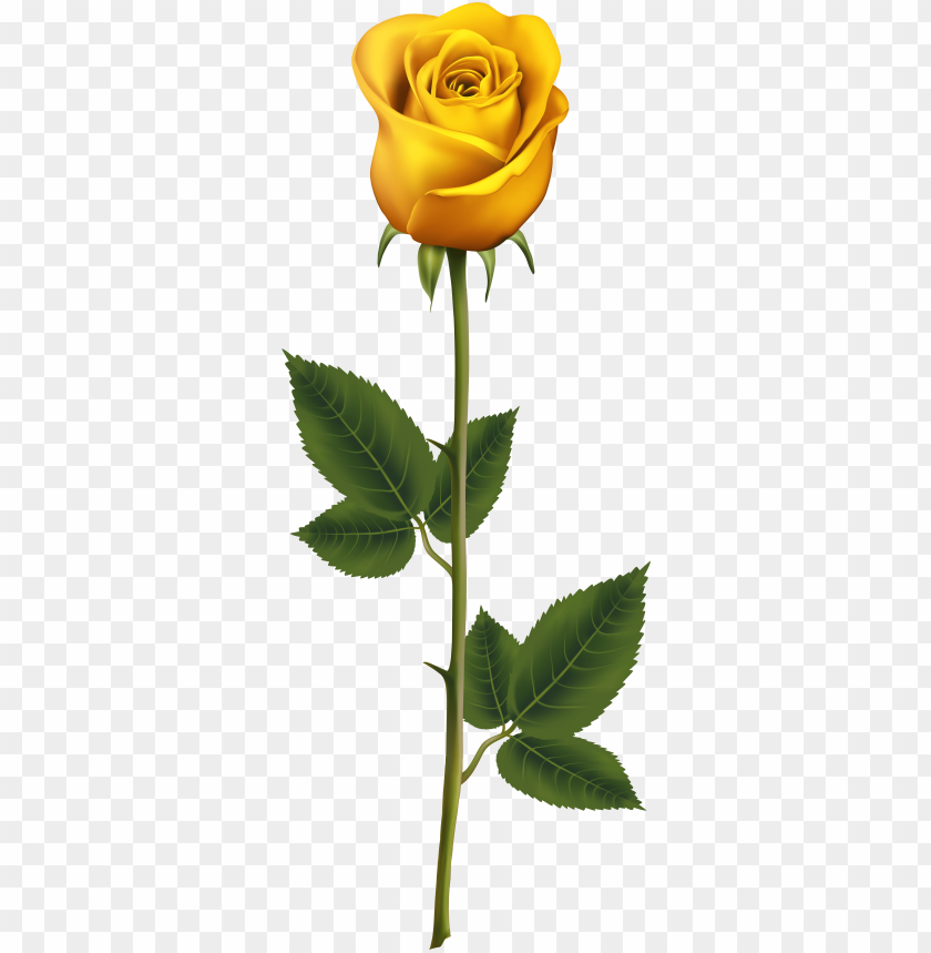 free PNG free yellow rose buckle photos, spring, flowers, hand - yellow rose with stem PNG image with transparent background PNG images transparent