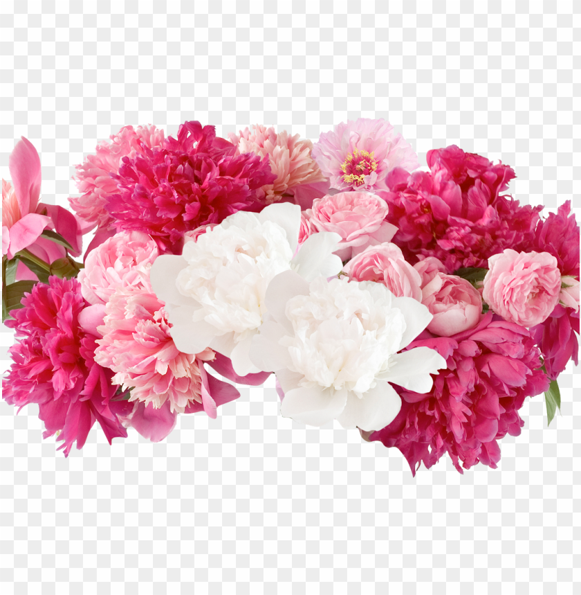 fresh cut - flowers - peonies - peonies PNG image with transparent background@toppng.com