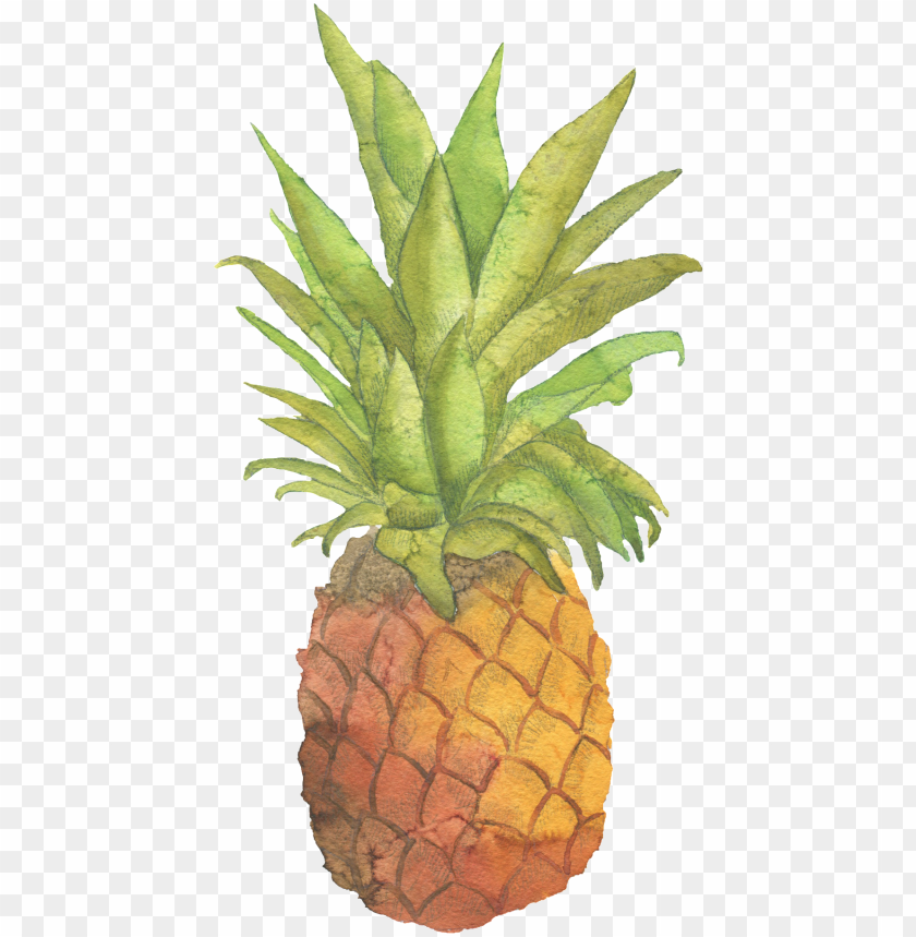 free PNG fresh pineapple hand painted watercolor transparent - zazzle be sweet pineapple tote PNG image with transparent background PNG images transparent