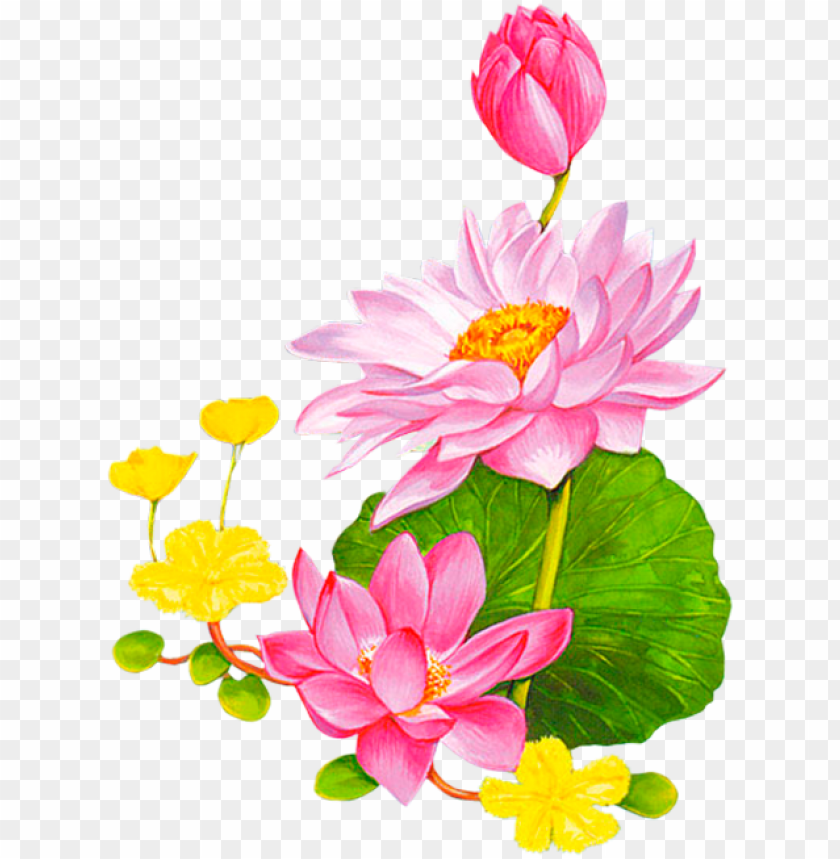 free PNG friendship flowers, vintage diy, lotus - png background lotus vector free PNG image with transparent background PNG images transparent