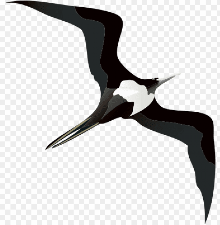 free PNG frigate bird drawing PNG image with transparent background PNG images transparent