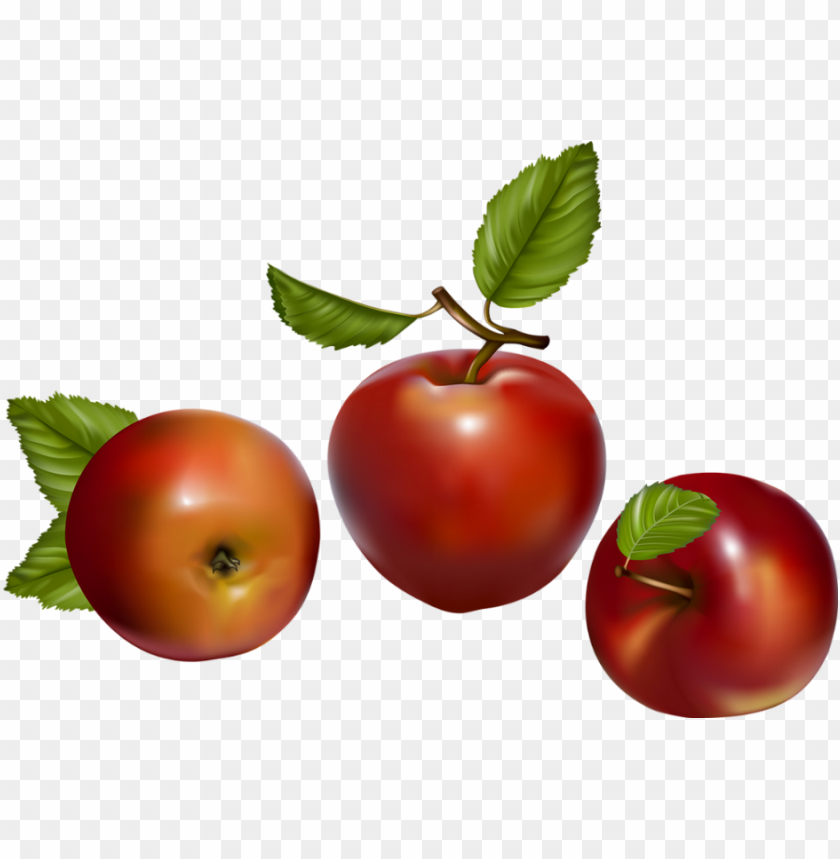 free PNG fruit vector PNG image with transparent background PNG images transparent