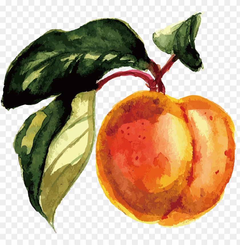 free PNG fruit watercolor painting - fruit watercolor PNG image with transparent background PNG images transparent