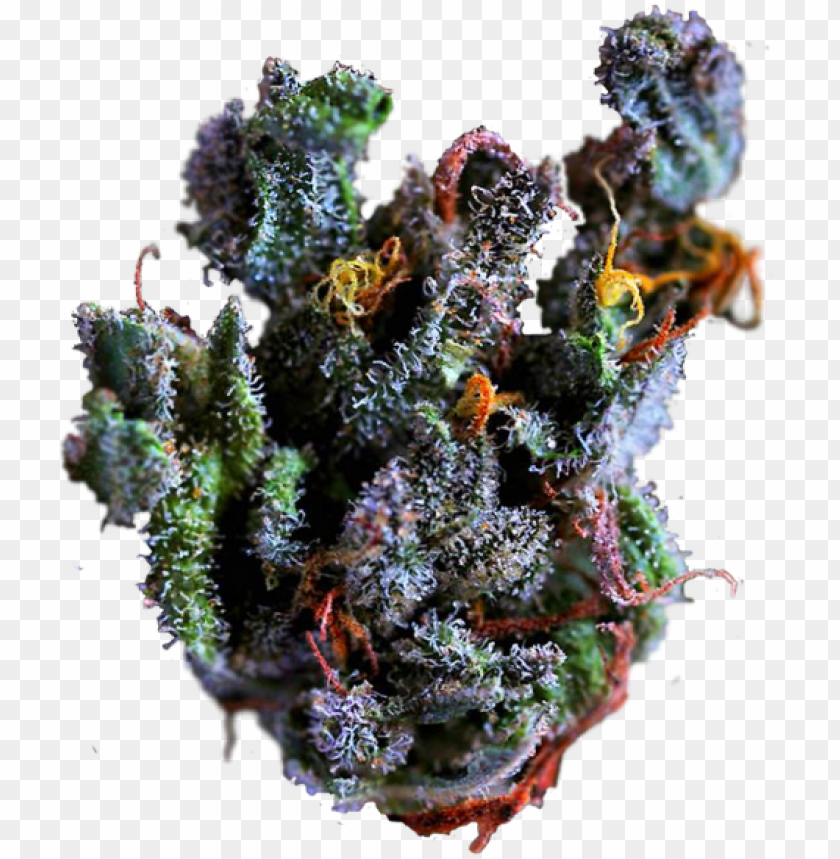 free PNG fruity pebbles on tumblr weed nug png - close up marijuana bud PNG image with transparent background PNG images transparent