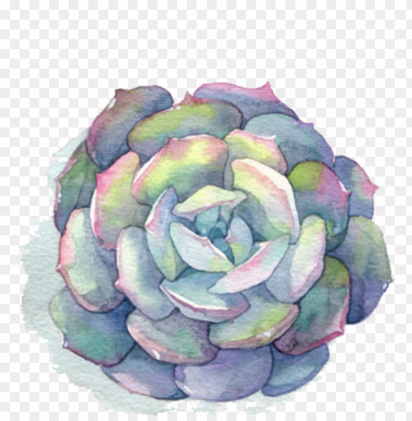 free PNG ftestickers watercolor flower succulent - succulent watercolor PNG image with transparent background PNG images transparent
