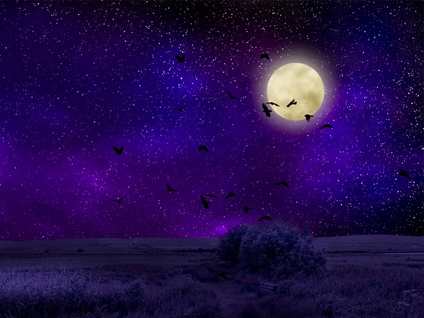 free PNG full moon, starry sky, birds, night, photoshop background PNG images transparent