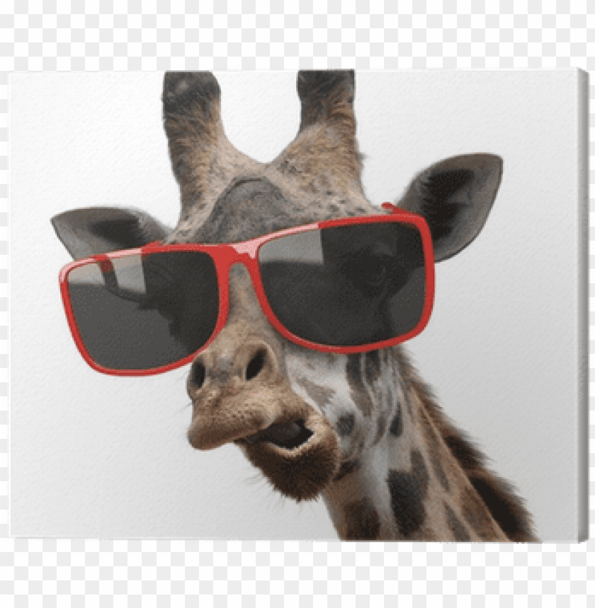 free PNG funny fashion portrait of a giraffe with hipster sunglasses PNG image with transparent background PNG images transparent