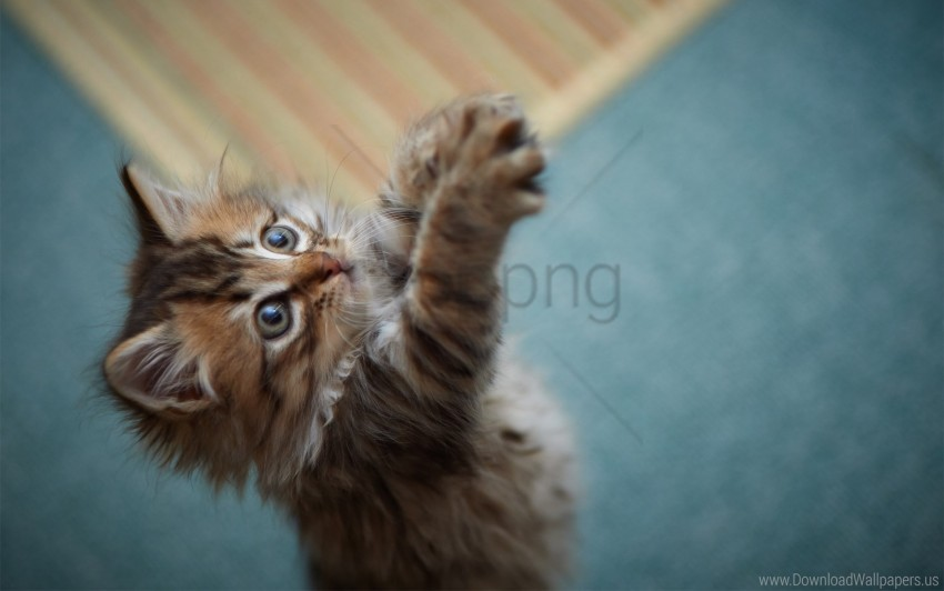 free PNG fur, furry, game, kitten, paws wallpaper background best stock photos PNG images transparent