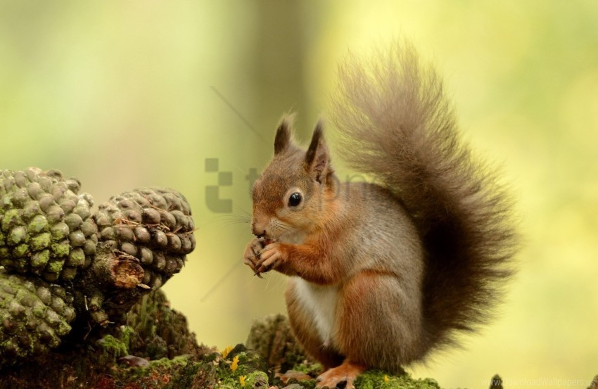 free PNG furry, squirrel, tail, tree wallpaper background best stock photos PNG images transparent