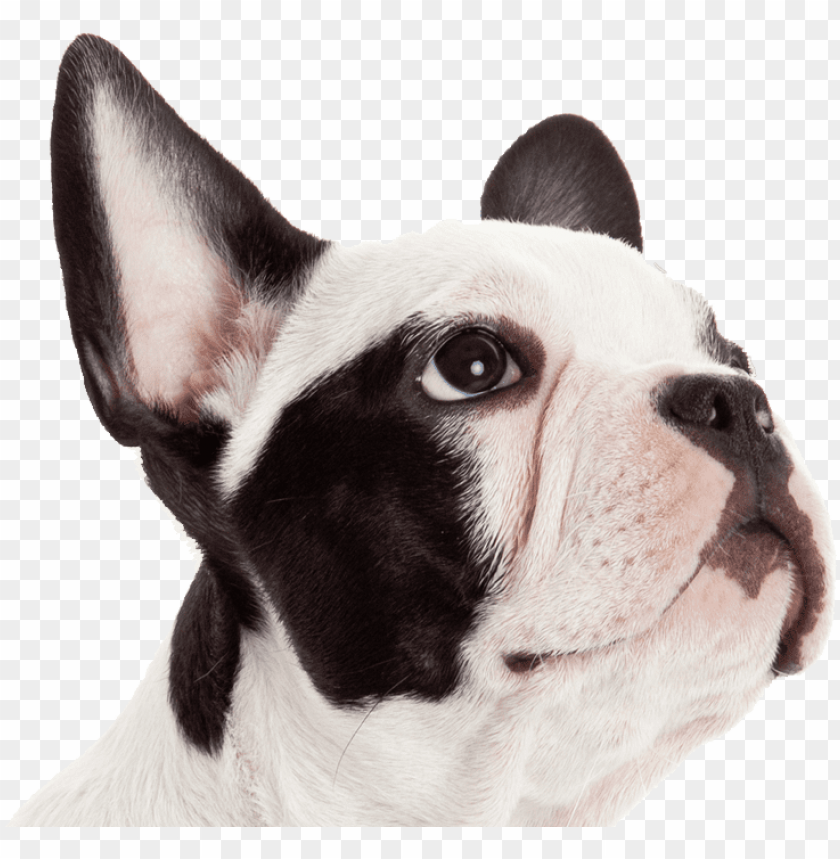 free PNG get pet insurance PNG image with transparent background PNG images transparent
