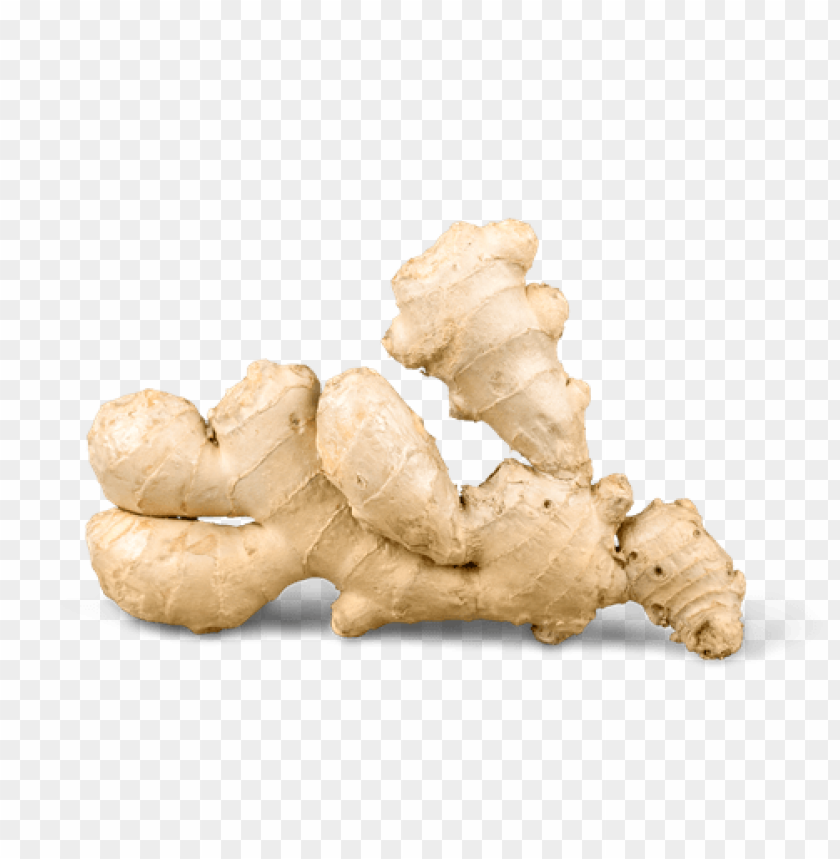free PNG Download ginger  image png images background PNG images transparent
