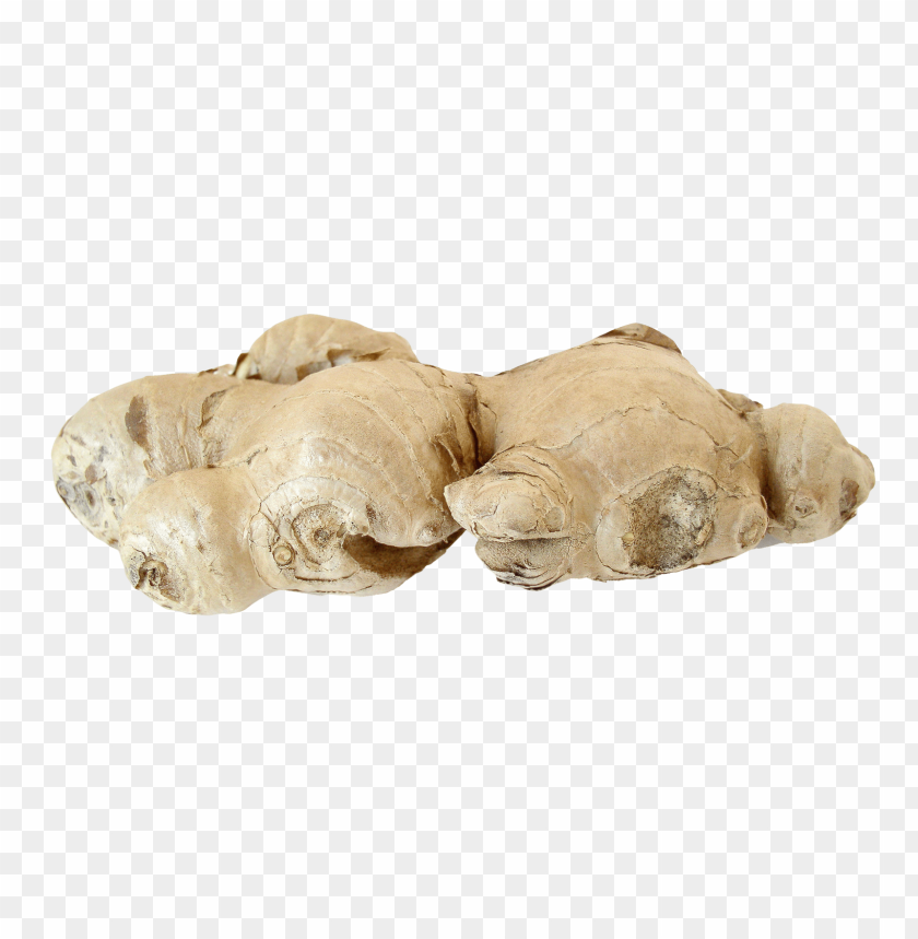 free PNG Download ginger root png images background PNG images transparent