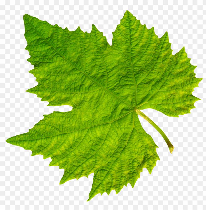 free PNG Download grape vine leaf png images background PNG images transparent