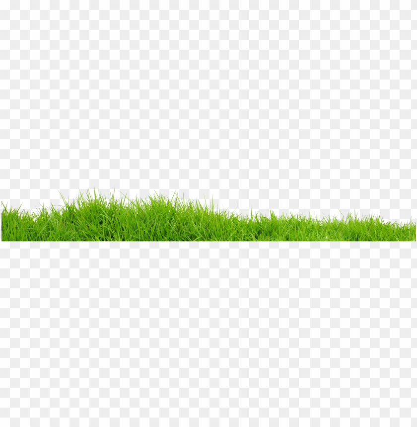 free PNG Download grass png images background PNG images transparent