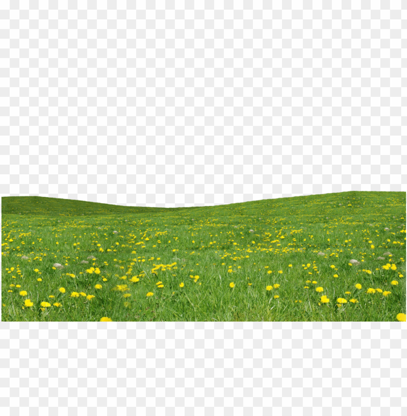 free PNG Download grass download png png images background PNG images transparent