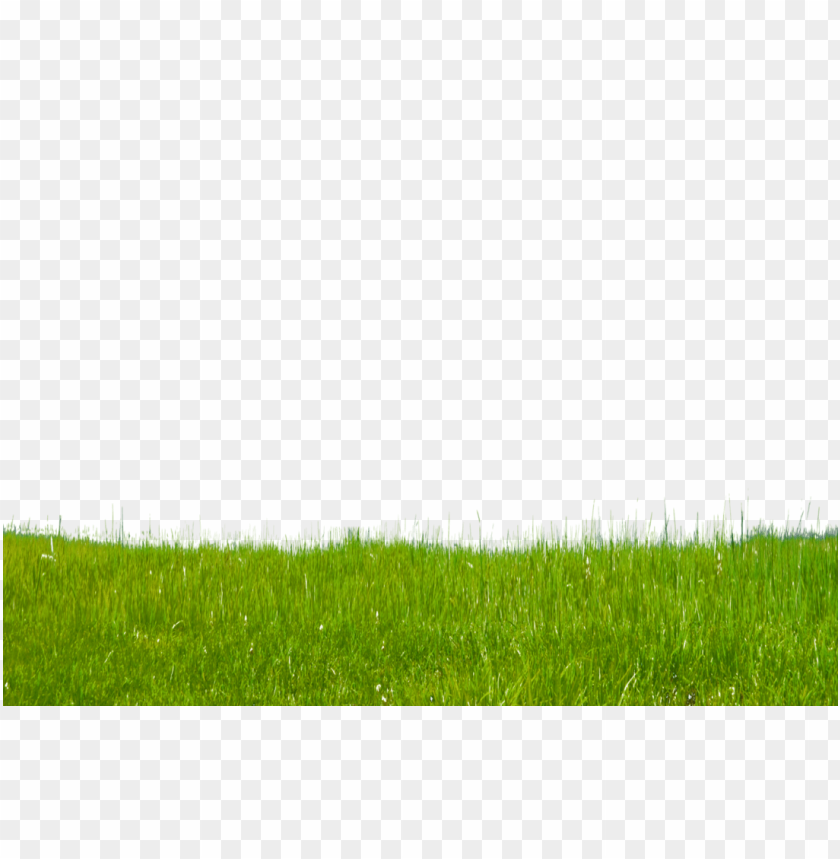 free PNG Download grass free download png png images background PNG images transparent