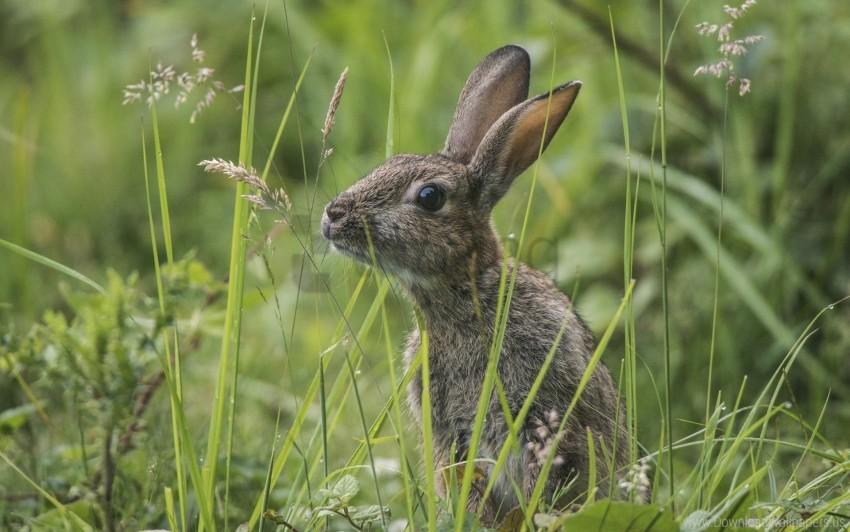 free PNG grass, hide, rabbit, sit wallpaper background best stock photos PNG images transparent
