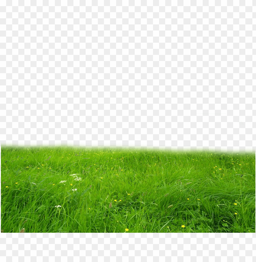 free PNG Download grass high-quality png png images background PNG images transparent