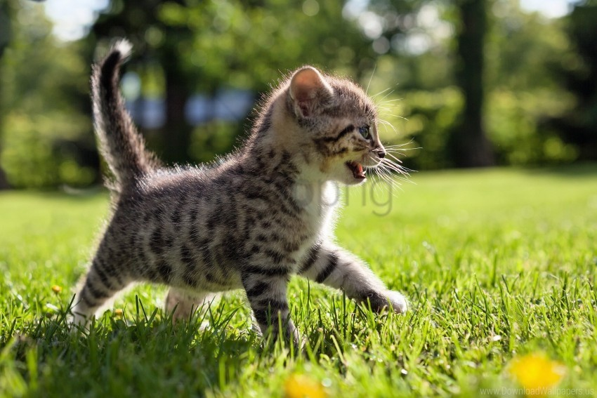 free PNG grass, kid, kitten, walk wallpaper background best stock photos PNG images transparent