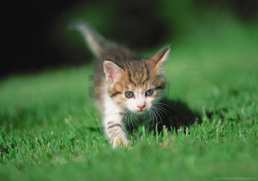 free PNG grass, kitten, legs wallpaper background best stock photos PNG images transparent