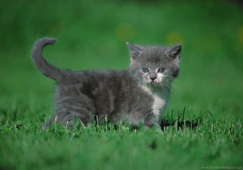 free PNG grass, kitten, walk wallpaper background best stock photos PNG images transparent