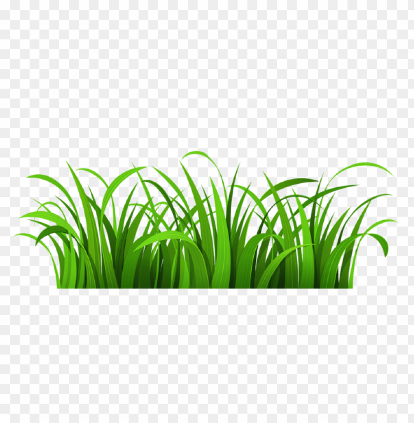 free PNG Download grass patch png images background PNG images transparent
