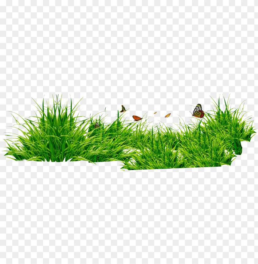 free PNG Download grass patch with insects png images background PNG images transparent
