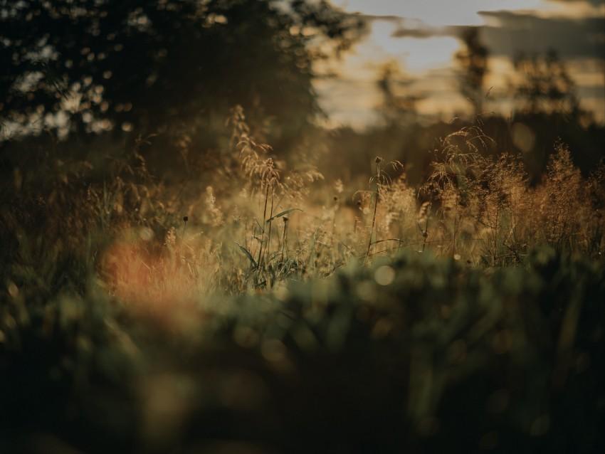 free PNG grass, plants, blur, lawn, nature background PNG images transparent