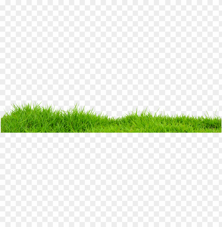 free PNG Download grass s png images background PNG images transparent