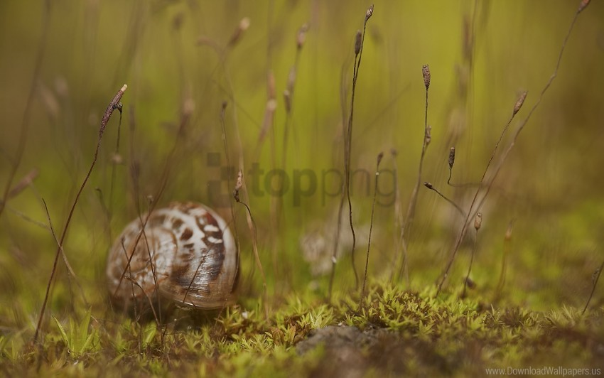 free PNG grass, shell, snail wallpaper background best stock photos PNG images transparent