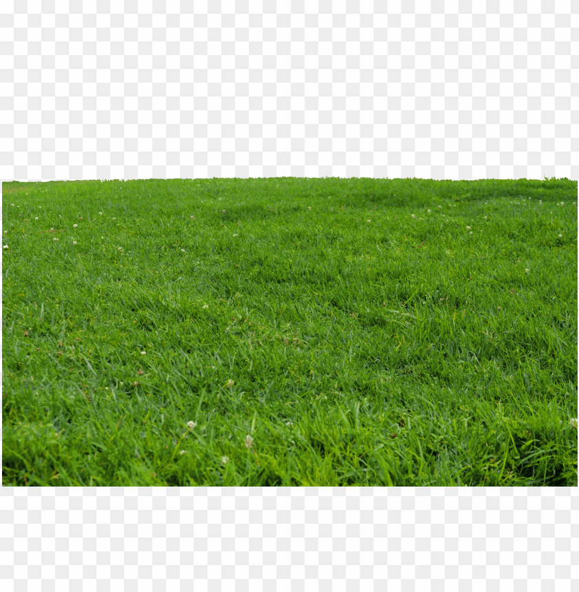 free PNG Download grass transparent png images background PNG images transparent