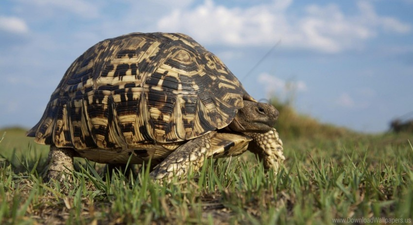 free PNG grass, turtle, walk wallpaper background best stock photos PNG images transparent