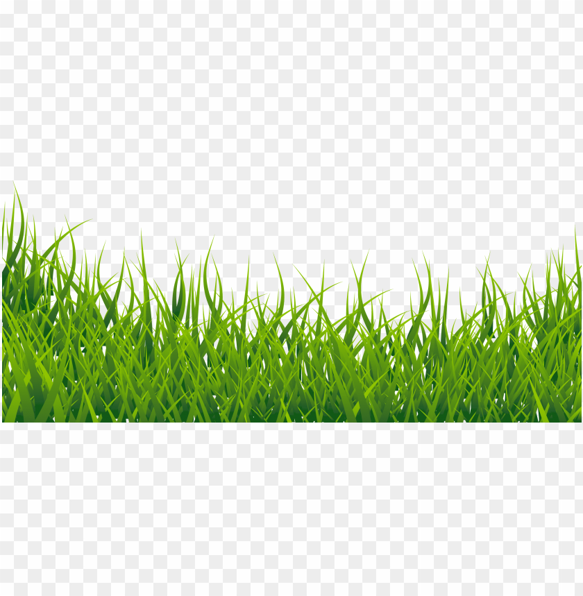 download grass vector png images background toppng download grass vector png images