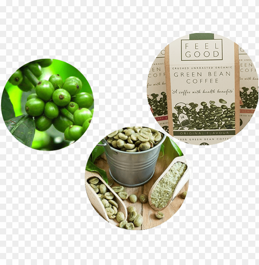 free PNG green coffee beans banner PNG image with transparent background PNG images transparent