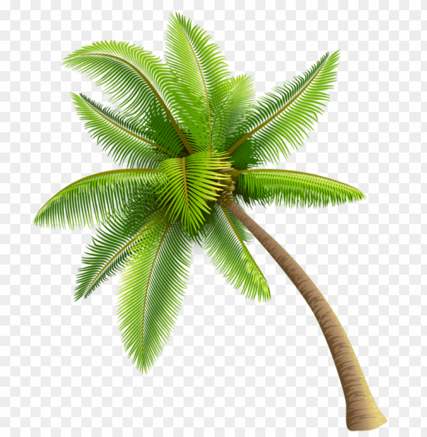 free PNG Download green palm tree png images background PNG images transparent